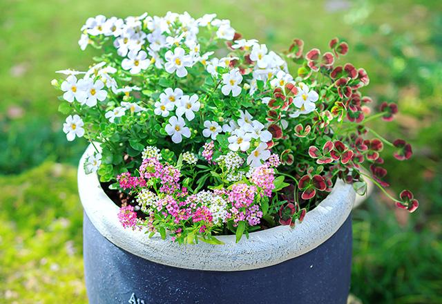 小ぶりの器に小ぶりな花