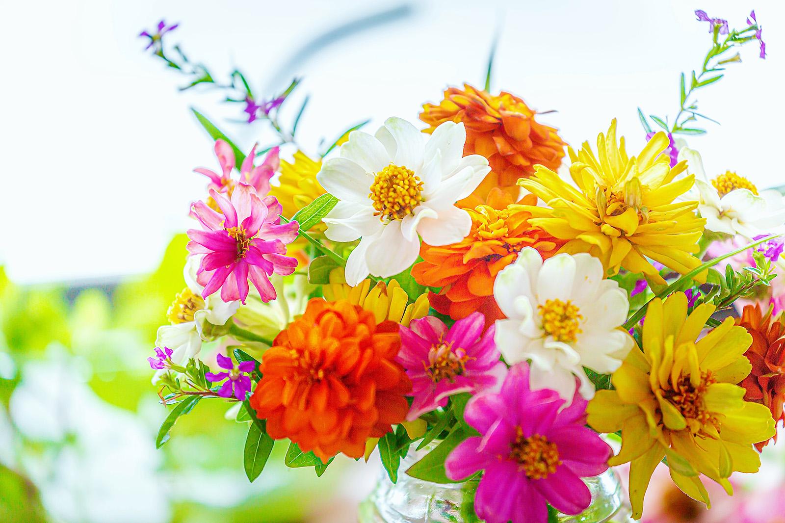 ジニアの花束
