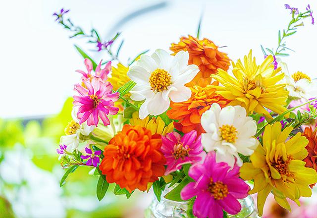 ジニアの花束 -1-