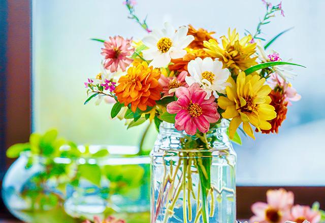 ジニアの花束 -2-